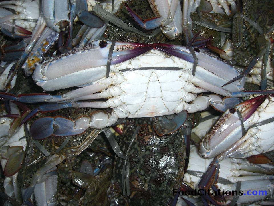 Crabs_LabradorStalls