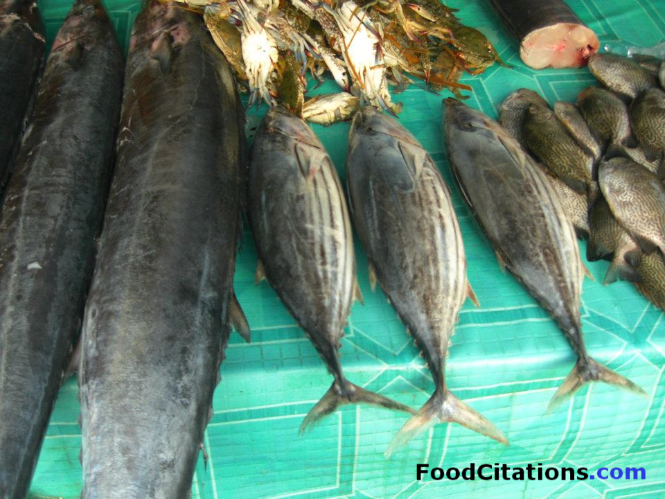 Tuna_Labrador