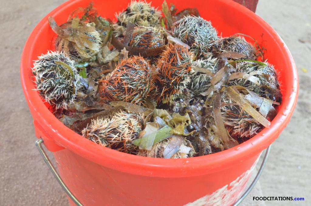 Sea_Urchin_Bucket