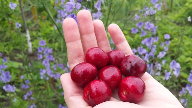 cherry-2363739_640