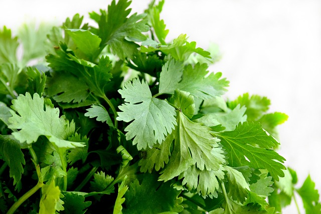Cilantro: The Veggie That Divides Nations