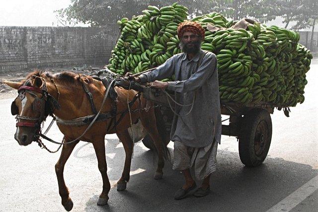 History of Banana